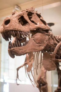 museum-of-natural-history-01
