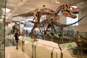museum-of-natural-history-04