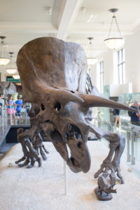 museum-of-natural-history-09