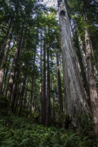 oregon-trip-ca-2017-175
